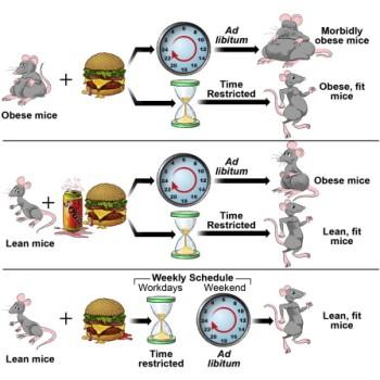 Plan nutritional para bajar de peso gratis